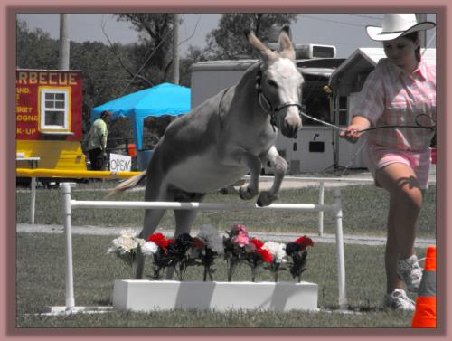 Roller & Katie winning Youth In-Hand Jumping at the Bedford County Fair 2010!