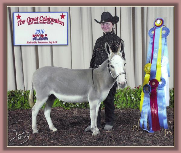 Katie & Roller winning High Point Youth at The Great Celebration Mule & Donkey Show in 2010!